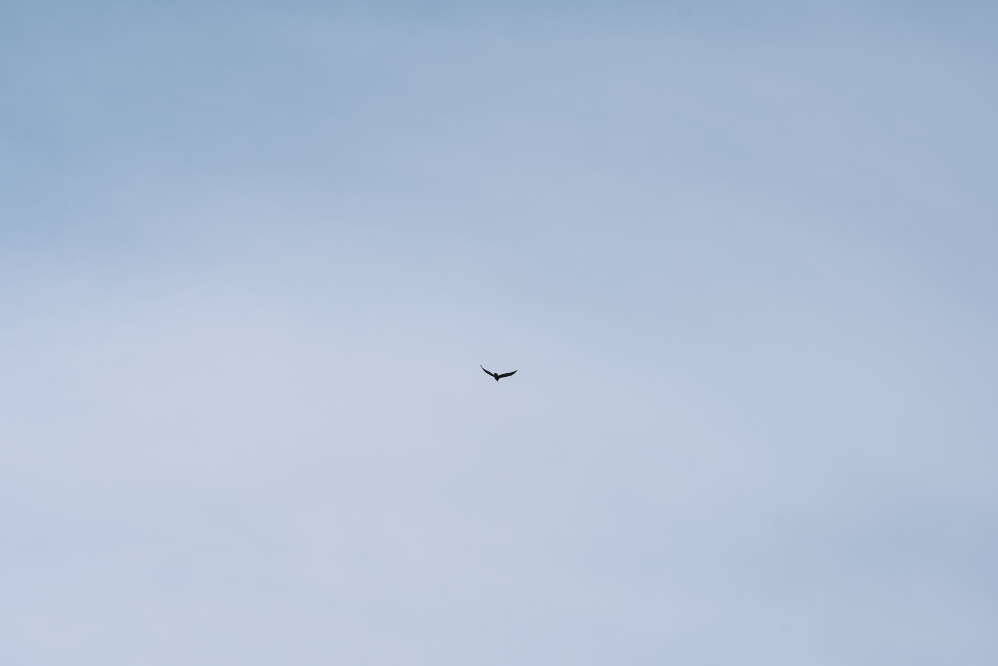 bird flying in sky